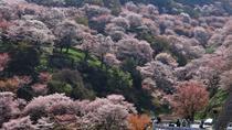 Yoshino Sakura, Nagoya, Day Trips