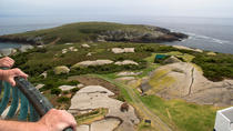 Montague Island Tour from Narooma, New South Wales, Half-day Tours