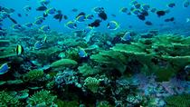 Maldives Sun and Snorkel Including Transportation by Speed Boat and Traditional Maldivian Afternoon...