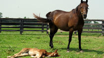 Lexington KY Historic Horse Farm Tour, Lexington, Family Friendly Tours & Activities