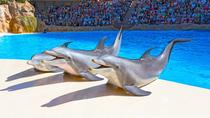 Loro Parque Direct Entry Ticket, Tenerife, Theme Park Tickets & Tours