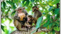 Self-Guided Private Day Tour: Ticket For Nanwan Monkey Island With Chauffeur Service, Sanya, ...