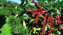 Blue Mountain Coffee Tour from Ocho Rios, Ocho Rios, Coffee & Tea Tours