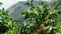 Blue Mountain Coffee Tour, Ocho Rios, Coffee & Tea Tours