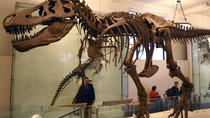 Private Tour of the American Museum of Natural History, New York City, Museum Tickets & Passes