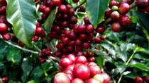 Espiritu Santo Coffee Tour from San Jose , San Jose, Coffee & Tea Tours
