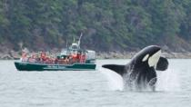 Whale Watching Tour from Granville Island in Vancouver, Vancouver, Dolphin & Whale Watching