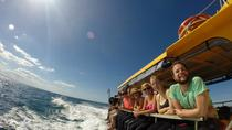 Swim with Dolphins in the Bay of Plenty with a Full-Day Tour, Tauranga, Swim with Dolphins