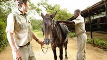 Horse Trails, Kruger National Park, 4WD, ATV & Off-Road Tours