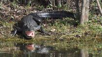 Everglades Adventure Day with Swamp Buggy and Airboat Rides, Fort Myers