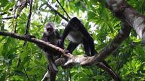 Monkey River Tour and Manantee Watch, Placencia, Cultural Tours