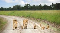 Nairobi National Park, Elephant Orphanage, Giraffes Centre & Karen Blixen Museum, Nairobi, Safaris