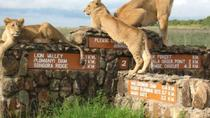 Nairobi National Park Half-Day Tour, Nairobi, Half-day Tours