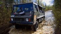 Denali Backcountry Safari, Denali National Park, Eco Tours