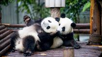 Tour privato di un giorno con panda di Chengdu con due pasti, Chengdu, Private Sightseeing Tours