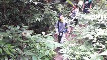 Exclusive Trek to Doi Suthep from Chiang Mai Including Lunch, Chiang Mai, Hiking & Camping