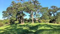 Half-Day Bush and Beach Walk on Waiheke Island, Auckland, Walking Tours