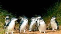 1 Day Penguin Destination - Melbourne to Phillip Island (return), Melbourne, Sightseeing Passes