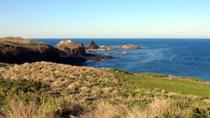 Phillip Island Tour Including Cape Woolamai Walking Trail, Phillip Island, Full-day Tours