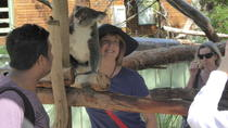 Hunter Valley Wine and Wildlife Tour from Sydney Including Walkabout Wildlife Park
