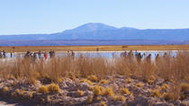Day Trip to Cejar and Tebinquinche Lagoons from San Pedro de Atacama, San Pedro de Atacama, Day ...