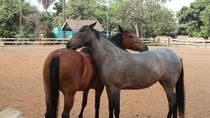 An Equestrian Experience - 1 Hour Horseback Riding with Pickup and Dropoff, Lagos, Horseback Riding