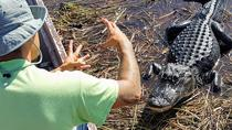 1-Hour Airboat Ride and Nature Walk with Naturalist in Everglades National Park, Miami, Airboat...