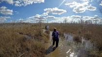 Everglades Swamp Walk mit einer Naturalist und Ten Thousand Islands Boat Tour, Miami, Eco Tours