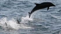 Dolphin Cruise, Gulf Shores, Day Trips