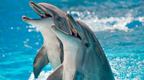 Private Dolphin Cruises in Orange Beach, Gulf Shores, Dolphin & Whale Watching