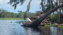 St Johns River Kayak Experience, Daytona Beach, Kayaking & Canoeing