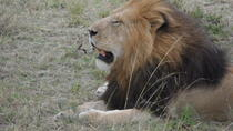 5 Days Tsavo East ,Tsavo west, Amboseli, Nairobi safari, Mombasa, Multi-day Tours