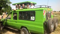 9 days Tanzania and kenya safaris from Arusha town to Nairobi, Arusha, Multi-day Tours