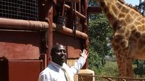 David shedrick Girraffe centre and karen blixen Full day tour, Nairobi, Day Trips