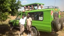 Mikumi national park full day tour from Dar es sallam, Dar es Salaam, Full-day Tours