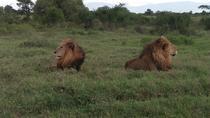 NAIROBI NATIONAL PARK TOUR, Nairobi, Private Sightseeing Tours