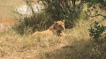 NAKURU NATIONAL PARK DAY TOUR FROM NAIROBI AND NAIVASHA, Nairobi, Nature & Wildlife
