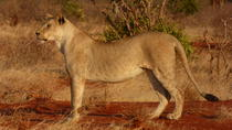 TSAVO EAST AND WEST NATIONAL PARKS DAY TRIP FROM MOMBASA, Mombasa, Day Trips