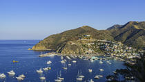 Catalina Island Cruise & Whale Watch From Dana Point, Dana Point, Dolphin & Whale Watching