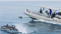 High Speed Zodiac Whale Watching Safari from Dana Point, Dana Point, Dolphin & Whale Watching