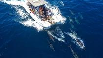 High Speed Zodiac Whale Watching Safari from Dana Point, Dana Point, Dolphin & Whale Watching