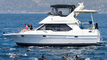 Private Luxury Motor Yacht Charter, Custom Whale Watching, Cruises, & More, Dana Point, Day Cruises