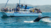 Walbeobachtung ab Dana Point und Delfinbeobachtung Eco-Safari, Dana Point, Dolphin & Whale Watching