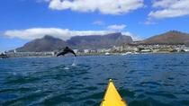 Kayaking with dolphins in Cape Town, Cape Town, Cultural Tours