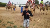Agadir Camel & Horse Riding, Agadir, Nature & Wildlife