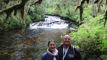 3 Hour Rainforest Walk and Totem Park, Ketchikan, Cultural Tours