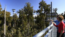 West Coast Tree Top Walk Experience, Franz Josef & Fox Glacier, Walking Tours