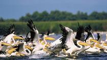 Bird watching in Danube Delta - Private day tour from Bucharest, Bucharest, Day Trips