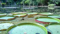 Botanical Garden, a Place of Science, Culture, and Leasure, Rio de Janeiro, Cultural Tours