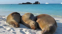 Galapagos Island 4 Days - 2 Islands : From Sand to Volcanoes, Galapagos Islands, Cultural Tours